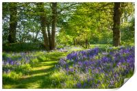Arlington Bluebell Woods, Print