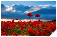 Sea of Poppies , Print