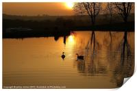 Sunset and Geese, Print