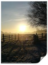 Frosty sunrise in Runnymede, Print