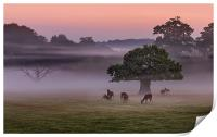 Misty Deer and Tree, Print
