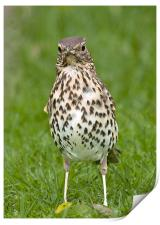 Thrush with slippers, Print