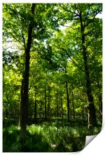 Peaceful Forest, Print