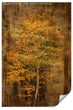 Golden Birch, Print