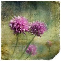Chives, Print