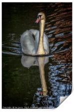 A Swan On The Kennet, Print
