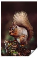 RED SQUIRREL ON AN OLD TREE STUMP, Print