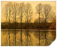 Trees reflection across the lake                 , Print