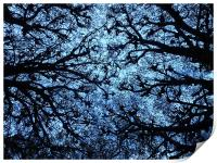 Evening Through the Branches, Print
