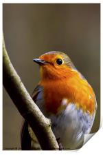 Bright eyed Robin, Print