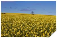 Yellow as far as the eye can see, Print