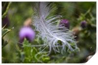 White feather caught in a web, Print