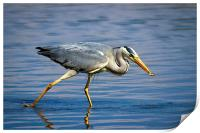 Snack time for Grey Heron, Print