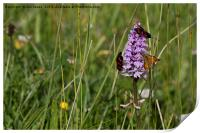 Wild Flowers and moths, Print