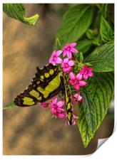 Butterfly on pink flowers, Print