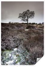 Winter Heather and Hawthorn, Print