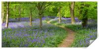 English Bluebell Wood, Print