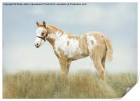 Pinto Filly, Print