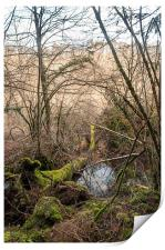 A swamp in the mountains, Print