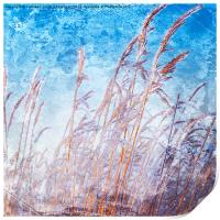 Reeds with hoar frost, Print