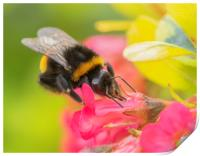 The Busy Bee, Print