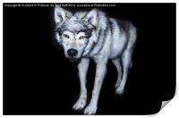 Wolf Canis Lupus, Print