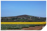Cornwall in Bloom, Print