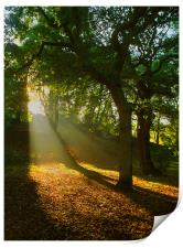 Light Rays in the Park, Print
