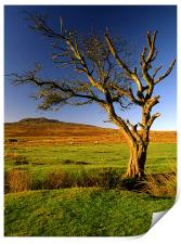 Dead Tree on Dartmoor, Print