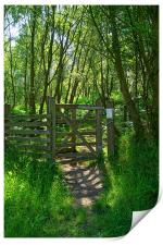 Wharncliffe Woods, Sheffield, South Yorkshire, Print