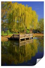 Weston Park Pond, Spring Reflections, Print