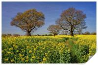 Rapeseed field & Trees, Derbyshire, Print