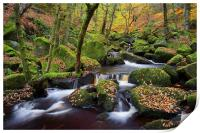 Autumn Colours in Padley Gorge , Print