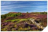 Heather on Millstone Edge                         , Print