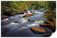 Rivelin Autumn Colours                            , Print