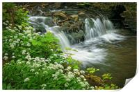 Porter Brook Falls & Wild Garlic                  , Print