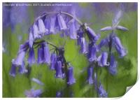 Bluebell Arch, Print